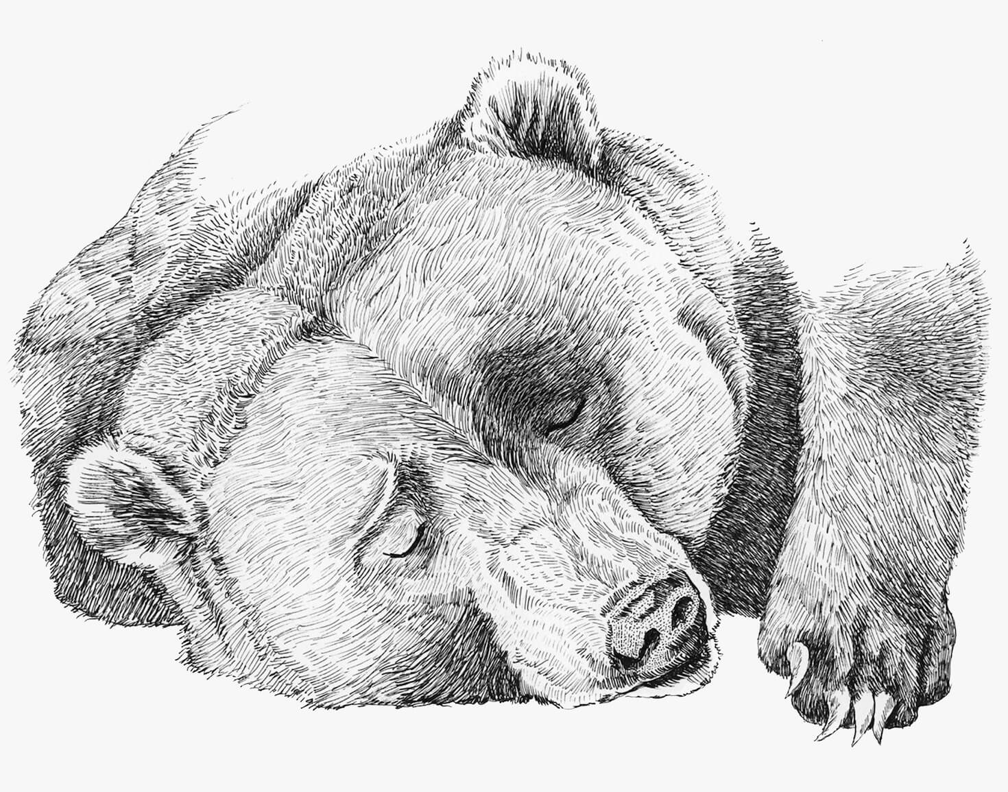 sleepingbear11x14small]